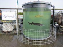 Grote ronde Aquaruim tank van Acryl 250 x 260 cm hoog (afhaal prijs)