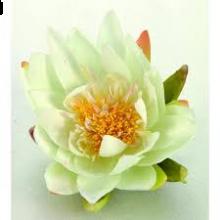 Waterlelie 16 cm creme zonder blad